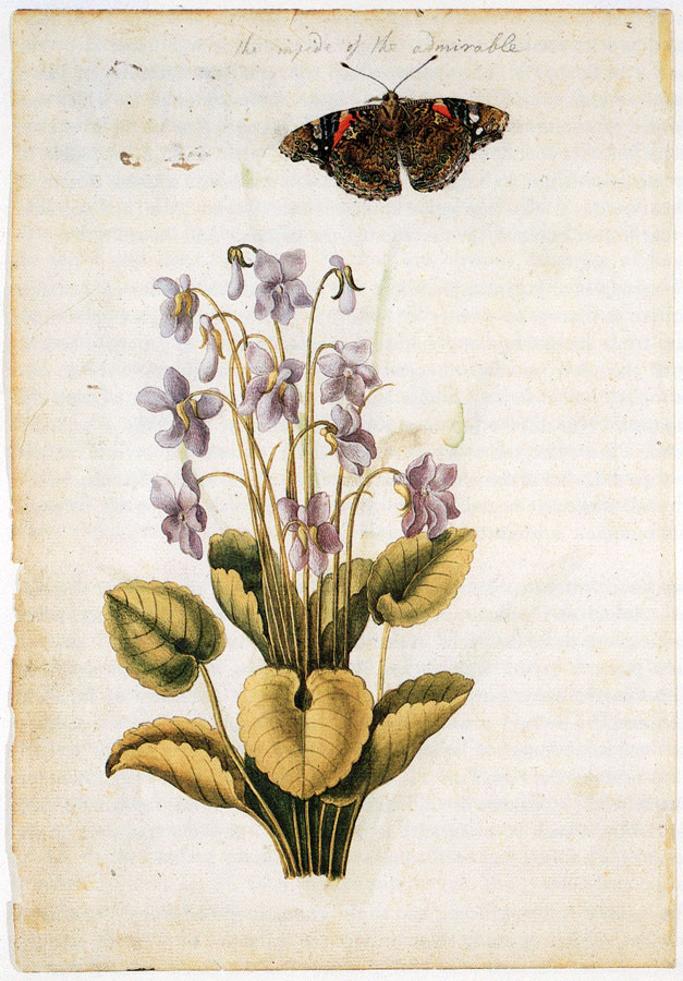 Jacques Le Moyne de Morgues (c.1533-88), Sweet violet (Viola odorata) and red admiral butterfly (Vanessa atalanta)